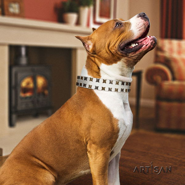 Amstaff easy to adjust genuine leather dog collar for fancy walking