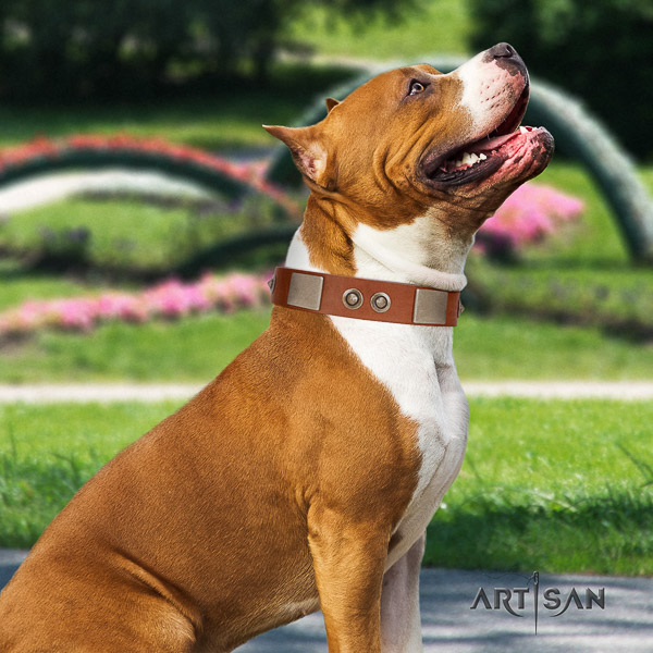 Amstaff exceptional genuine leather dog collar for comfortable wearing