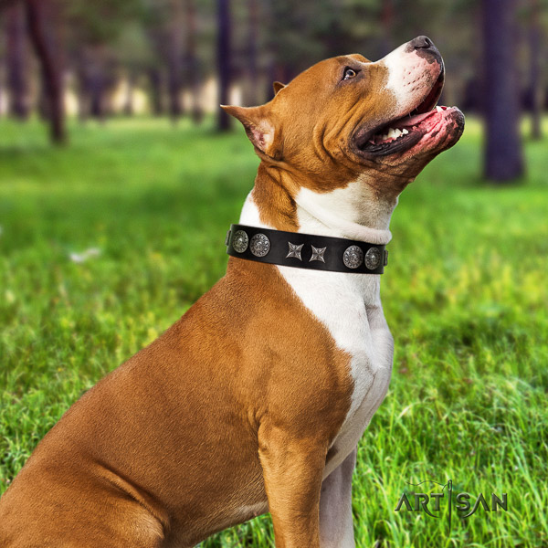 Amstaff decorated full grain natural leather dog collar for handy use