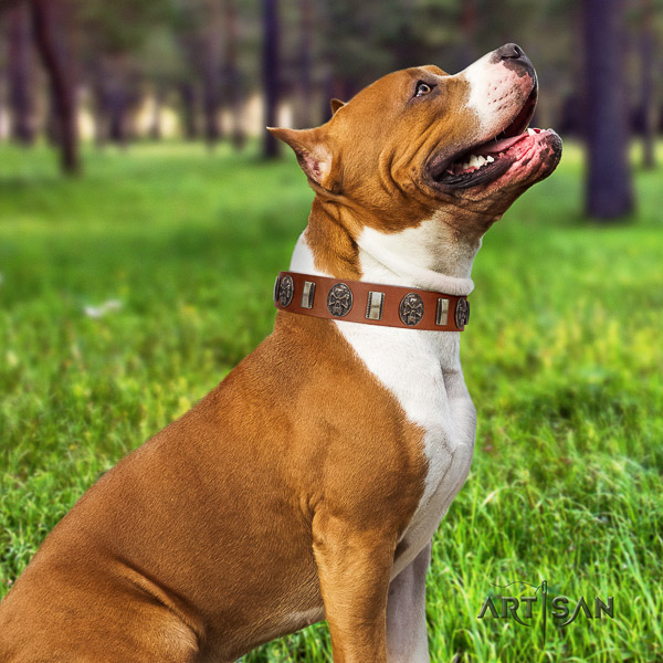 Amstaff exquisite genuine leather dog collar for everyday use
