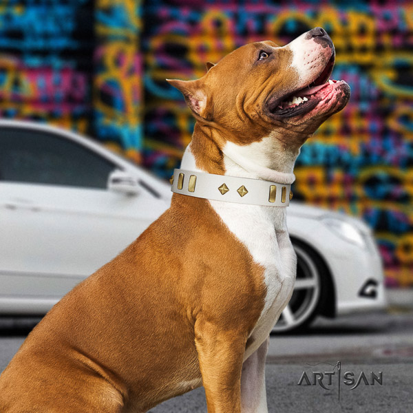 Amstaff remarkable full grain leather dog collar for comfy wearing