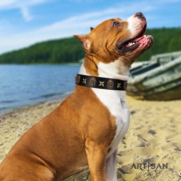 Amstaff top notch leather dog collar for comfortable wearing