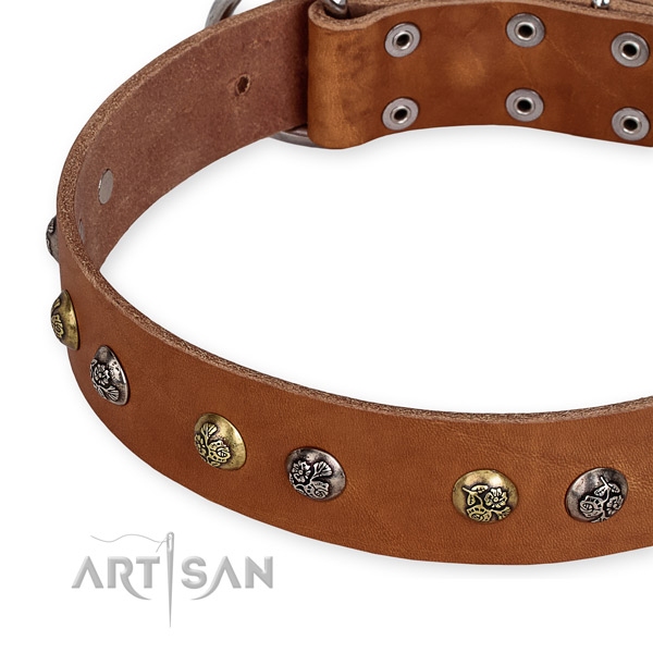 Full grain leather dog collar with remarkable rust-proof studs