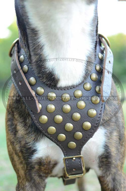 Reliable Amstaff Dog Harness