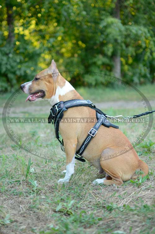 Easyto-put-On and Off American Staffordshire Terrier Leather Painted Harness