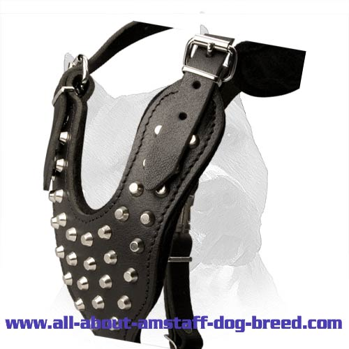Order Pyramids Studded Leather Amstaff Harness