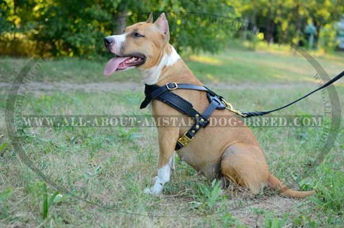 Comfortable And Easy In Use 3 Ways Adjustable Leather Dog  Harness