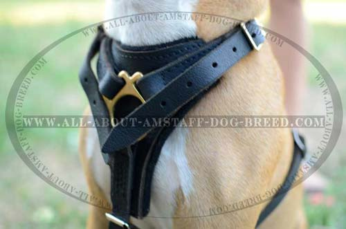 Firm Dog Harness For Powerful Amstaff Dogs