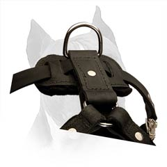 Leather Amstaff Dog Harness Is Available In 2 Colors