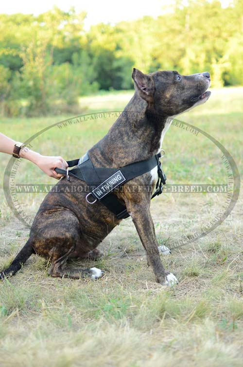 Perfect Reflective Reliable Nylon Amstaff Dog Harness