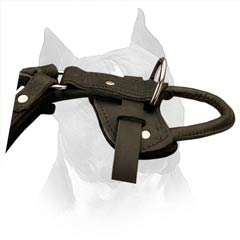 Padded Amstaff Dog Harness Will Delight Your Pet