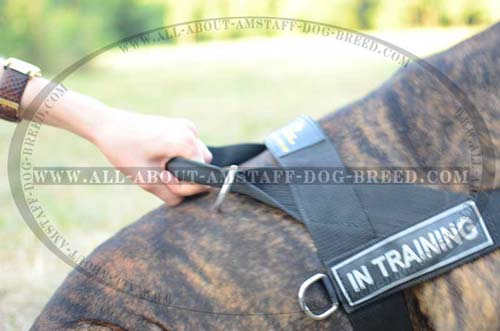 Gentle To The Touch Nylon Amstaff Dog Harness