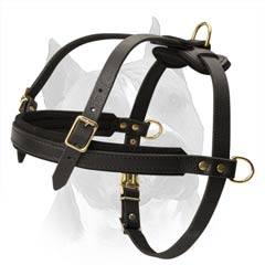 Wonderful Professional Leather Dog Harness With Chest  Strap