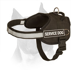 Nylon Dog Harness for Amstaff with Strong Strap