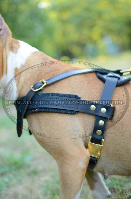 Best Rust-proof Brass Fitting Amstaff Dog Harness