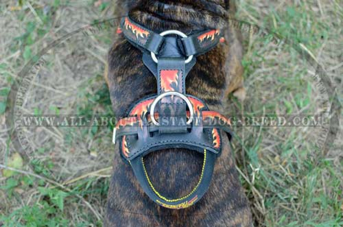 Leather Dog Harness For Amstaff Will Become Your  Irreplaceable Helper