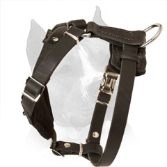 Puppy Studded Leather Harness for Amstaff with Nickel D-ring on Back Plate