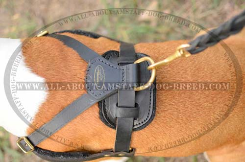 Brass D-ring for Fast Leash Attachment to Amstaff Leather Harness