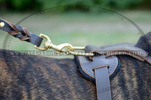 Brass D-ring for Lead Attachment Stitched to Back Plate of Leather Amstaff Harness