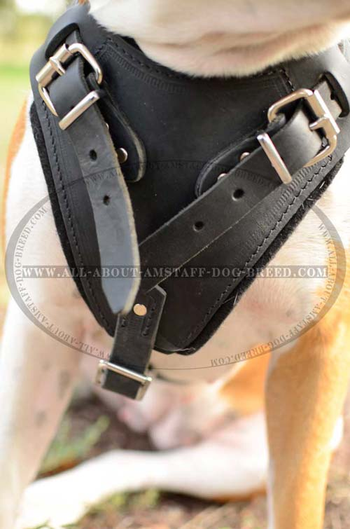 Buckles for Fast Harness Adjustment