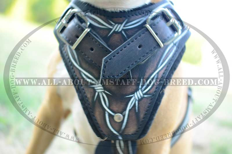 Chest Plate Barbed Wire Painted Of Amstaff Dog Harness H1BW BIG wire dog harness wiring diagrams longlifeenergyenzymes com wire dog harness at bayanpartner.co