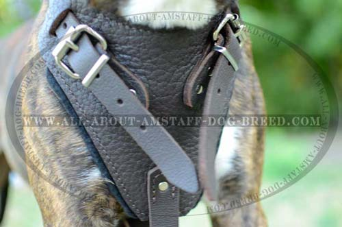 Adjustable Buckles for Fast Putting the Harness On and Off