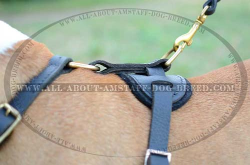 Unusual Dog Harness For Strong Amstaff Dogs