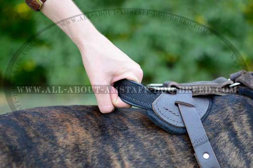 Durable Handle for Better Control Over Your Amstaff