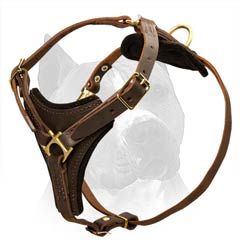 Strong Leather Amstaff Dog Harness With Everlasting Brass