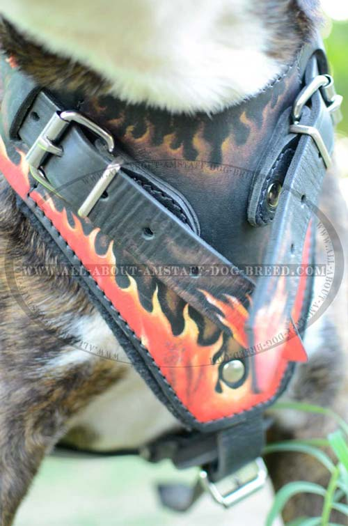 Wonderful Leather Dog Harness With Regulated Straps