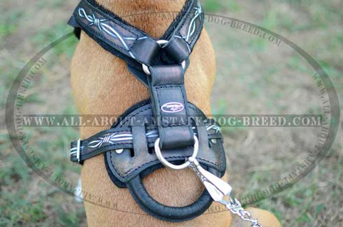 Steel Nickel Plated D-ring Serves for Fast Lead Connection to Amstaff leather Harness