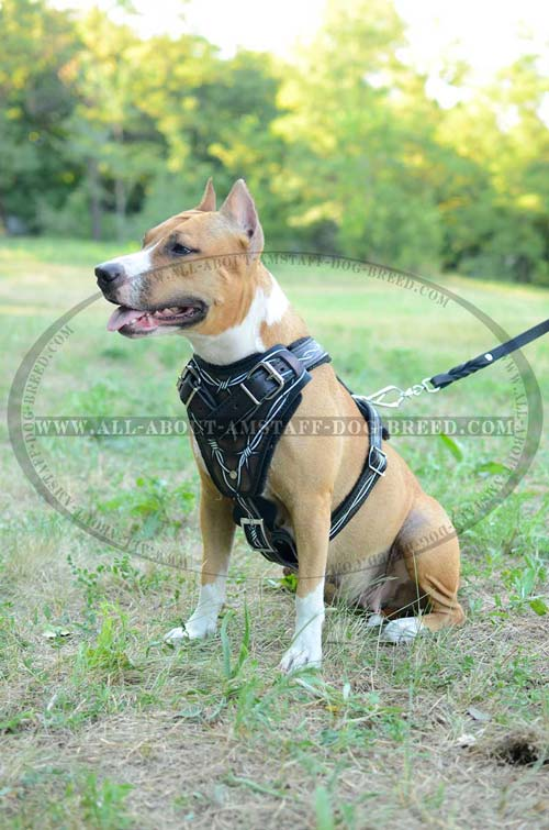 Unique Dog Harness With Easy-To-Use Quick Release Buckle