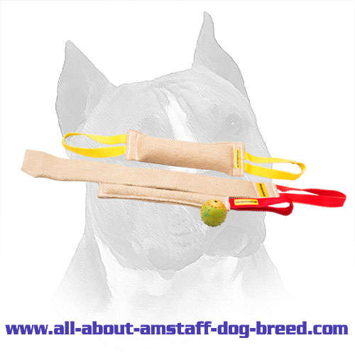 Amstaff Puppy Training Set With Training Toy For Free