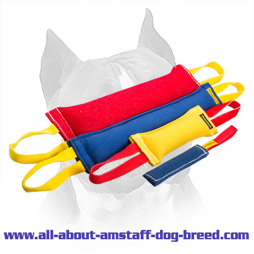 Adult Amstaff Bite Training Set With Amazing Gift