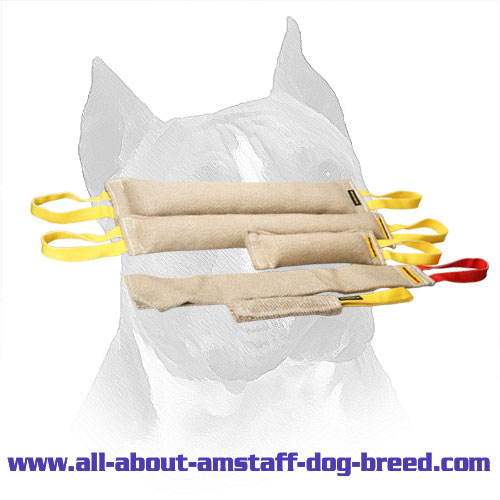 Adult Amstaff Training Set With Bite Rag For Free