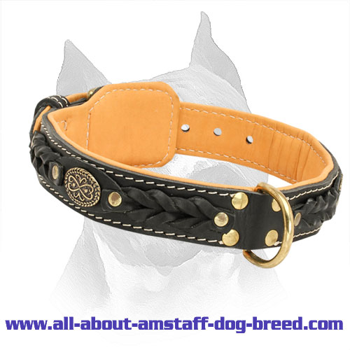 Royal Nappa Padded Hand Made Amstaff Leather Collar