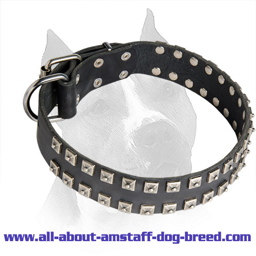 2 Rows Studded Leather Amstaff Collar