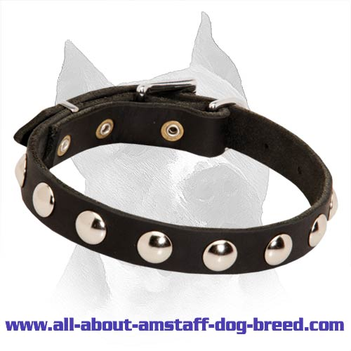 Amstaff Leather Collar with Massive Nickel Half Ball Studs