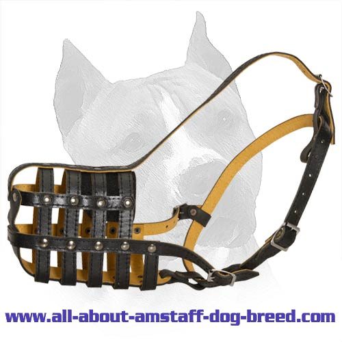 Comfortable Nappa Padded Amstaff Dog Muzzle