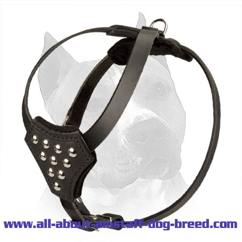 Amstaff Puppy Leather Harness with Nickel Half Ball Studs