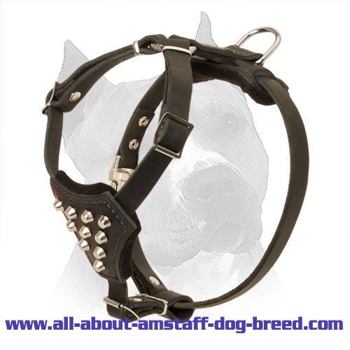 Studded Leather Amstaff Puppy Harness - Click Image to Close