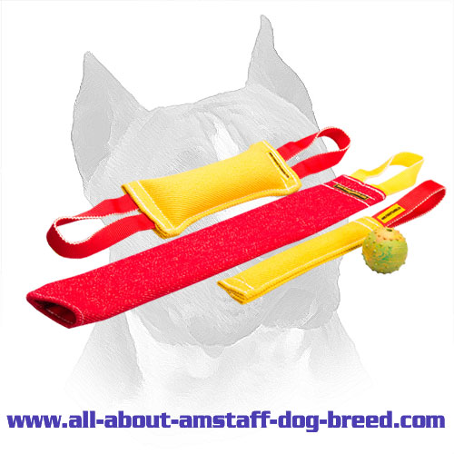 Amstaff Puppy Training Set With Great Training Toy For Free