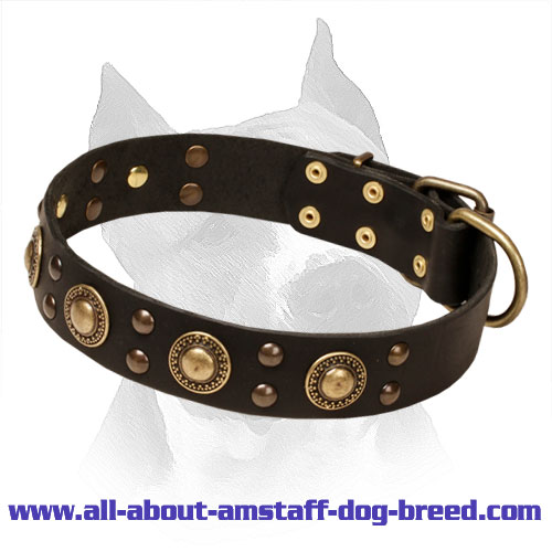 'Space-like' Leather Amstaff Collar with Brass Hardware
