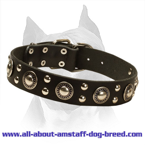 'Rock n Roll' Leather Amstaff Collar with Antique Design