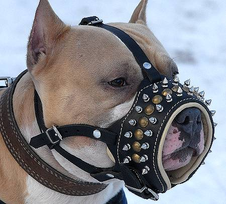 Our Best-Selling Royal Spiked Leather Dog Muzzle - Click Image to Close