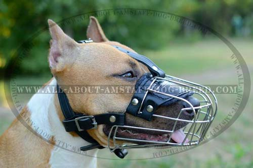 Wite Basket Muzzle For Amstaff Dog Training And Walking