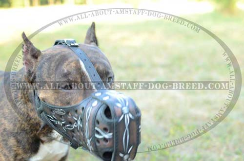 Easy In Use Handmade Leather Amstaff Dog Muzzle For Your  Lovely Pet
