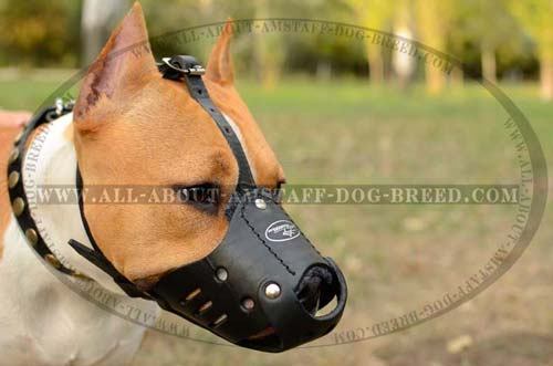 Extra Durable Amstaff Dog Muzzle For Obedience Training