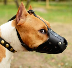 Choosing the Right Muzzle